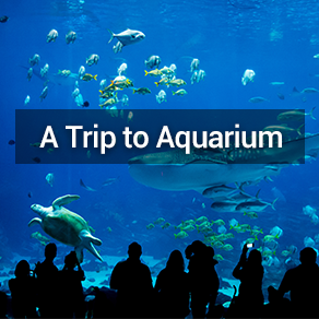 Reconnecting With Nature – A Trip To Aquarium